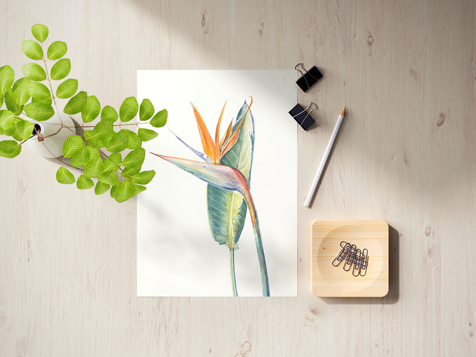 Print-birdofparadise-mockup-web.jpg