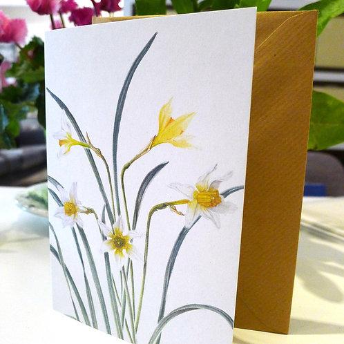 Daffodils (Memorina) - A6 Greeting Card