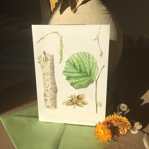 Hazel (stump & leaf)- A6 Greeting Card