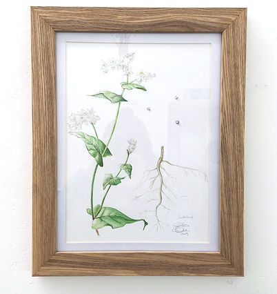 buckwheat-painting.jpg