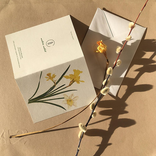 Daffodils - A6 Greeting cards