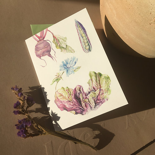Radicchio & veg - A6 Greeting cards