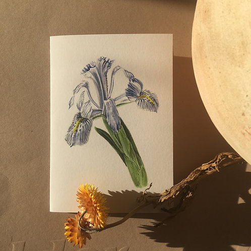 Iris - A6 Greeting Card