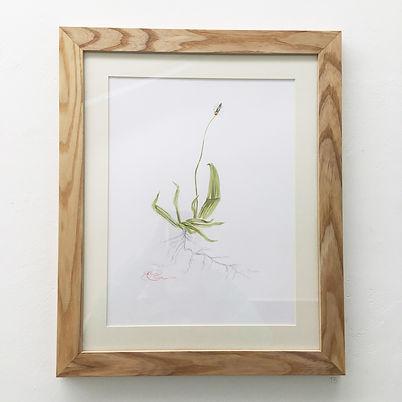 Plantain-painting.jpg