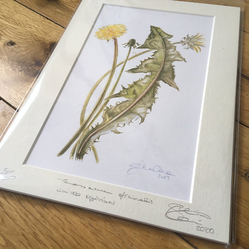 Dandelion - limited edition print