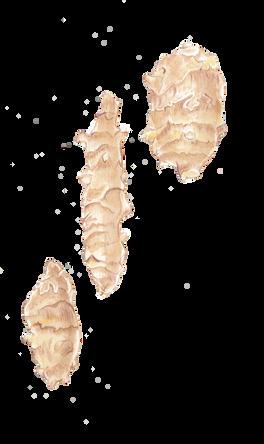 Jerusalem artichoke / Topinambur