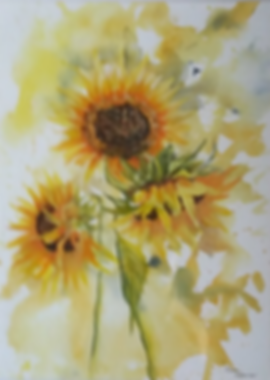 Watercolour painting of sunflowers