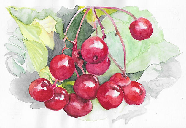 Painting of cherries ready to be picked