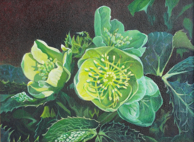 Hellebore with yellowish green flowers