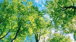 Environmental-Science-Trees.jpg