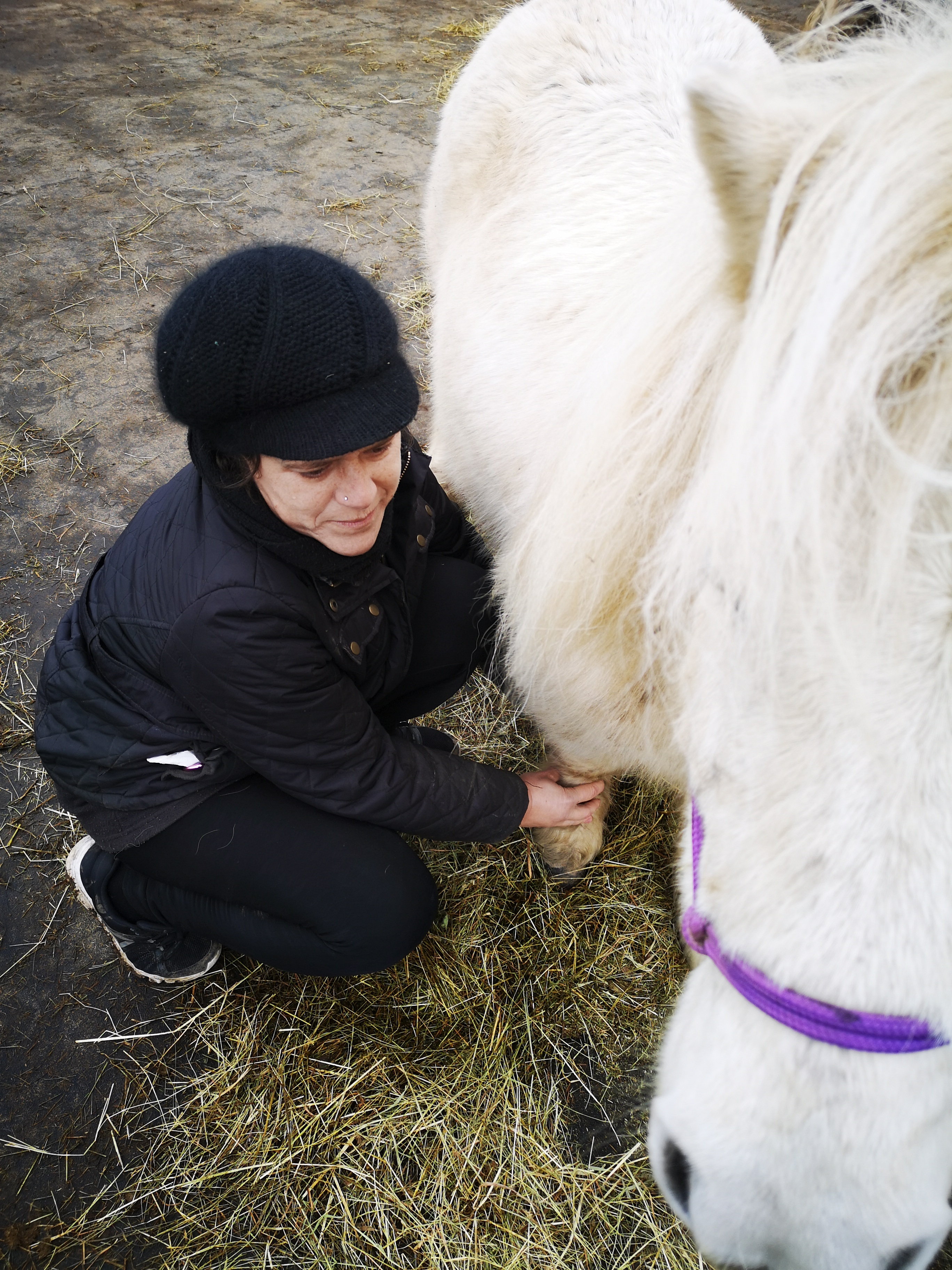 Therapies for Animals