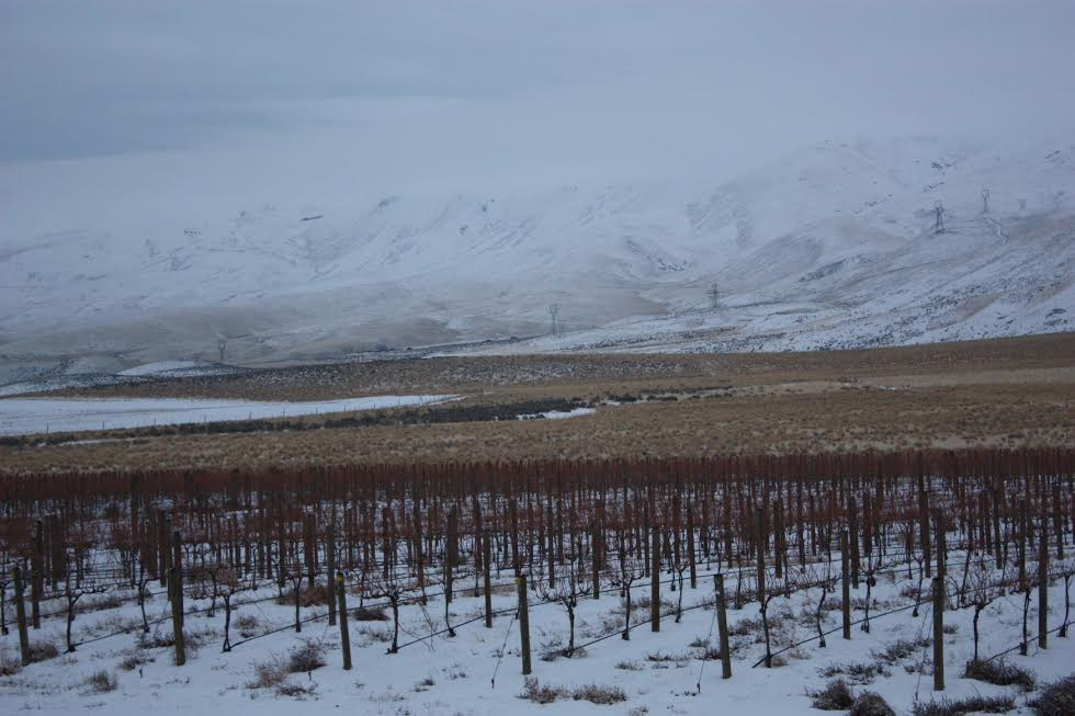 Kolibri Vineyard Winter Snow