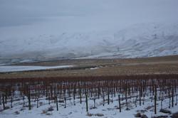 Kolibri Vineyard Winter Snow