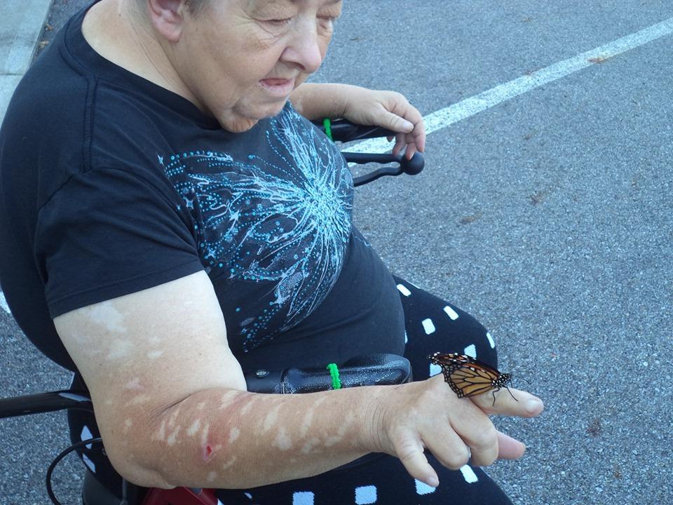 mel butterfly