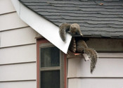 rodent1.jpg