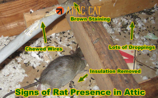 Rodent Proofing