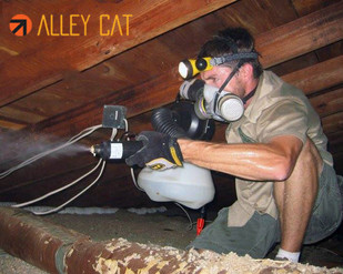 Attic cleaning in Oakland.