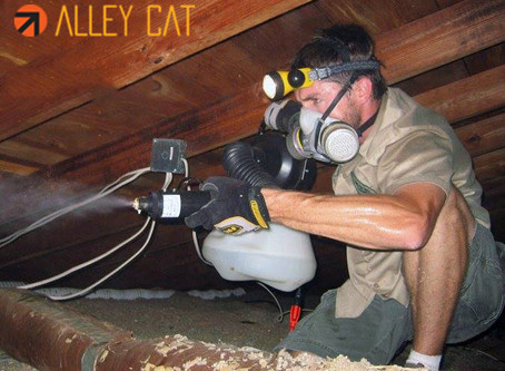 What is Rodent Proofing and Why it is Important for Homeowners Who Spot Rodent in their Home