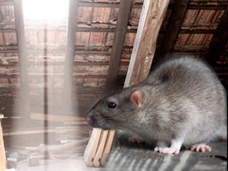 rodent-control.jpg