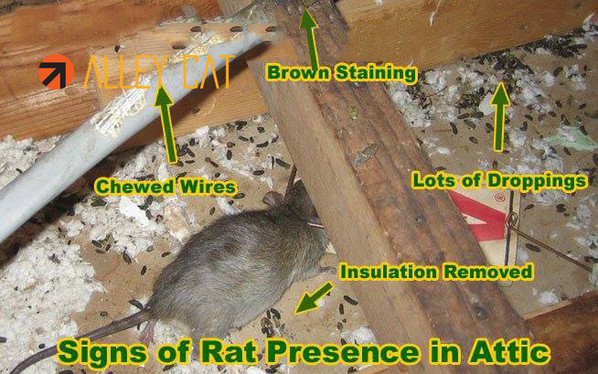 We are a family owned and operated rodent exclusion company in Oakland.