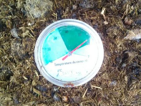 60° dans le fumier de la semaine dernière