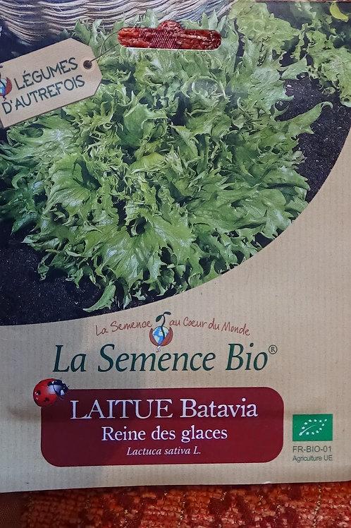 Graines Laitue Batavia Reine de glaces