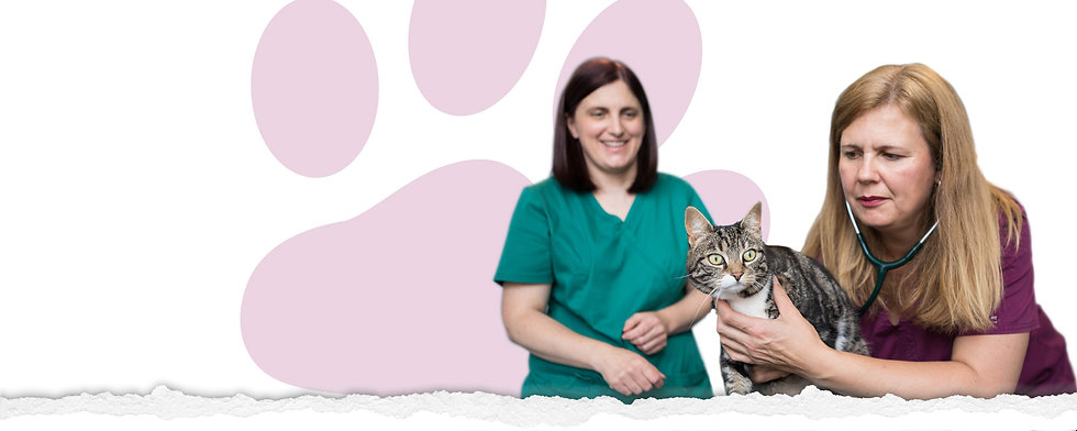 nurses holding cats