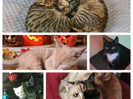SimplyCats 2021 Cat Calendar..entries open now!