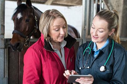 Female vet examining horse in stables