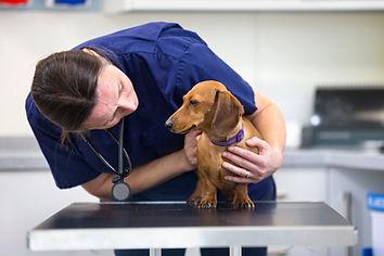 Vet examining pet dog on consultation table