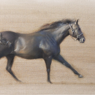 Mare and Foal Movement Study