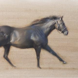 Mare & Foal Movement Study
