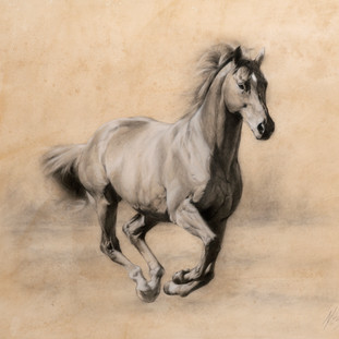 A Study of a Stallion