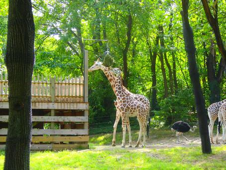 動物はかわいい、癒されます @ Bronx Zoo