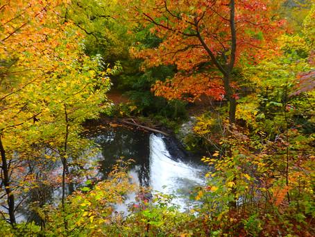 NY Botanical Garden ボタニカルガーデンの紅葉もキレイでした!