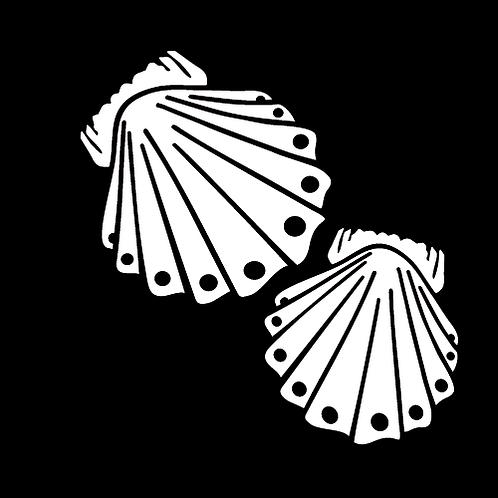 Sea Shells (B3)