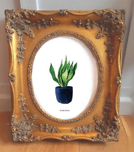 botanicalframedsnakeplant.jpg