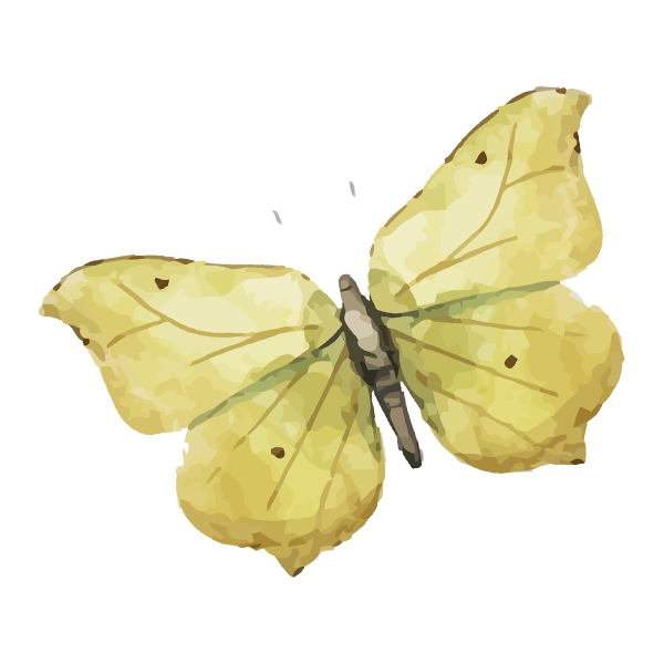 Watercolor%20Butterfly%208_edited.png