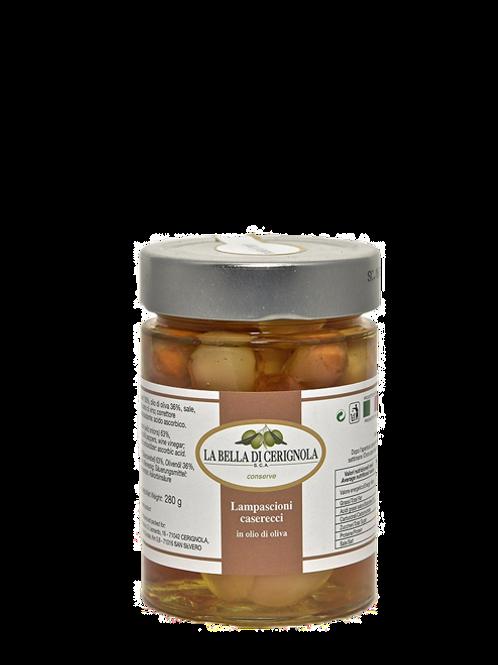 LAMPASCIONI CASERECCI in olio d'oliva