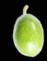 oliva%20verde%20big_edited.png