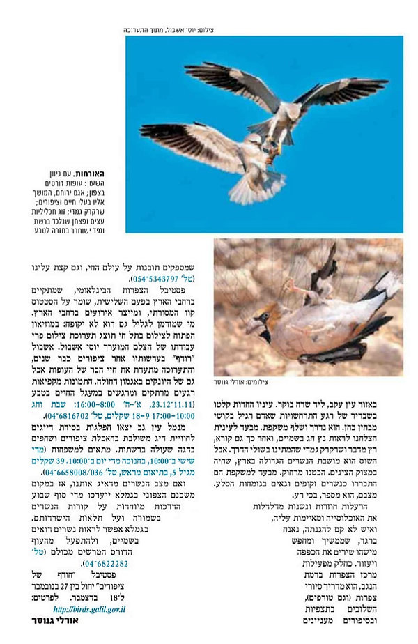 חורף של ציפורים 2.jpg