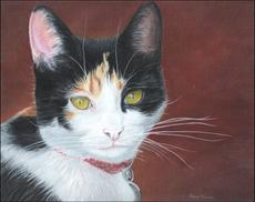 29.Gary's Cat