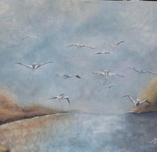 18. Seagulls