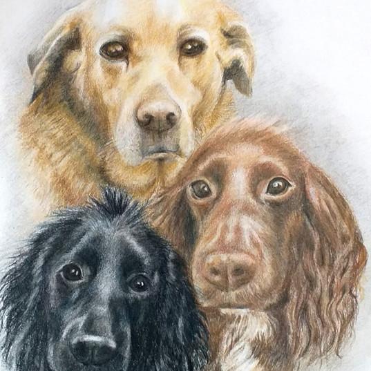 The Three Amigos - Pencil Crayons - NFS.