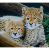 Cheetah Cubs - Acrylic - NFS.png