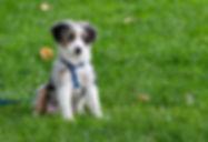 Canva-Puppy-On-Grass-Field.jpg