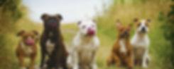 group-of-dogs-header.jpg