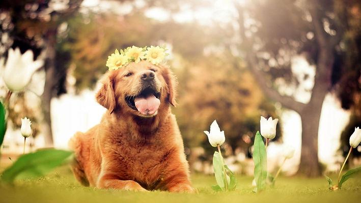 7037726-dog-nature-flowers.jpg