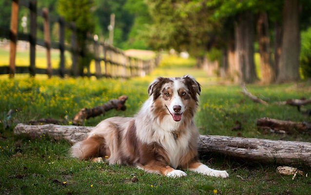 nature fences animals dogs tree trunk sh