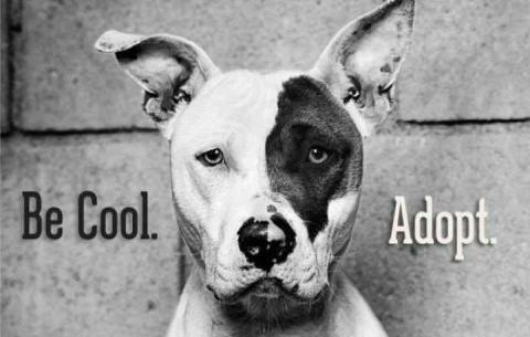 Pet Adoptions: The Natural Remedy of Anxiety